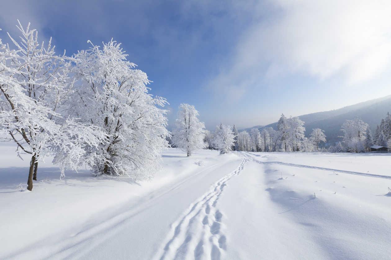 linda nieve argentino toronto